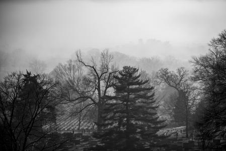 Arlington National Cemetery trees in fog