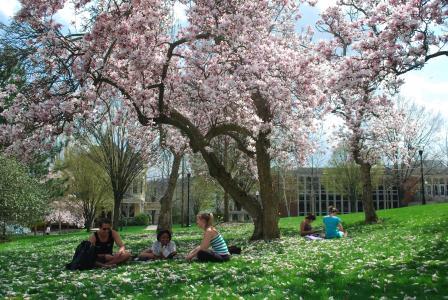 Spring tree blooms Campus Arboretum  Washington & Jefferson College