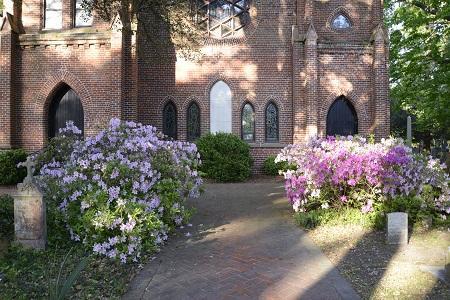Calvary Episcopal Churchyard Azaleas