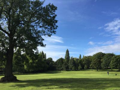 Brunswick Park trees summer