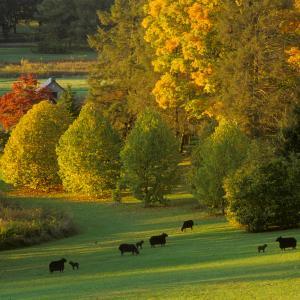 The Morris Arboretum fall color