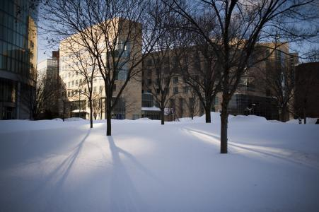 Northeastern University Arboretum