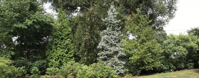 Clambee Arboretum