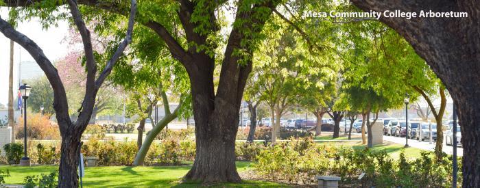 Mesa Community College Arboretum